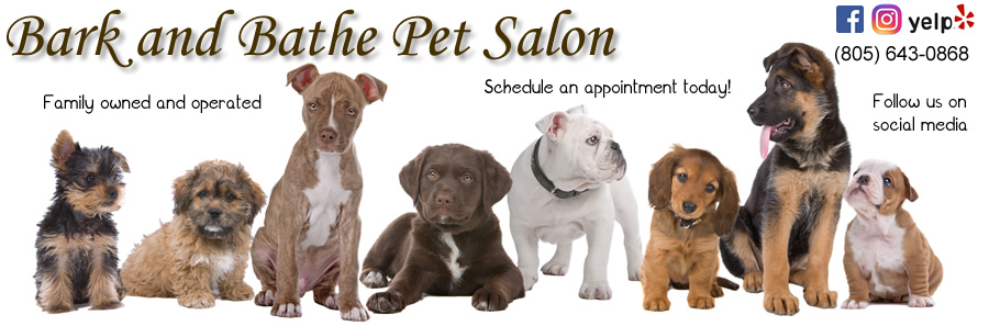Bark and Bathe Pet Salon artwork