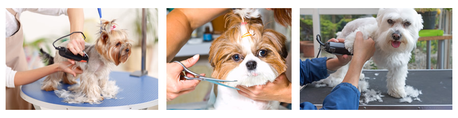 Pictures of dogs being groomed